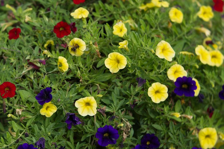 Photo of Katherine Barney's garden